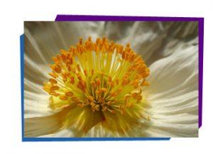 Pollen in plant