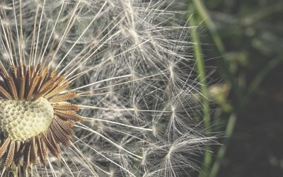 Help your Hay-fever NOW – Naturally